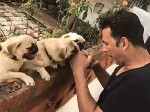 Akshay Kumar Workout With Little Pugs Is Too Cute
