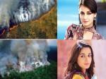 Bollywood Celebs Tweets On Amazon Forest Burning