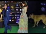 सलमान के पीछे आईफा 2019 में पहुंचा कुत्ता, लोगों ने कहा 'हिंट एंड रन' से बचना Video