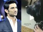 सुशांत सिंह राजपूत का डॉगी फज करता है उनका इंतजार? अभिनेता की भतीजी ने पोस्ट किया इमोशनल वीडियो