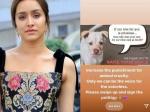 श्रद्धा कपूर फिर बनी बेजुबानों की आवाज, जानवरों के साथ दुर्व्यवहार करने वालों के खिलाफ कड़ी सजा की मांग