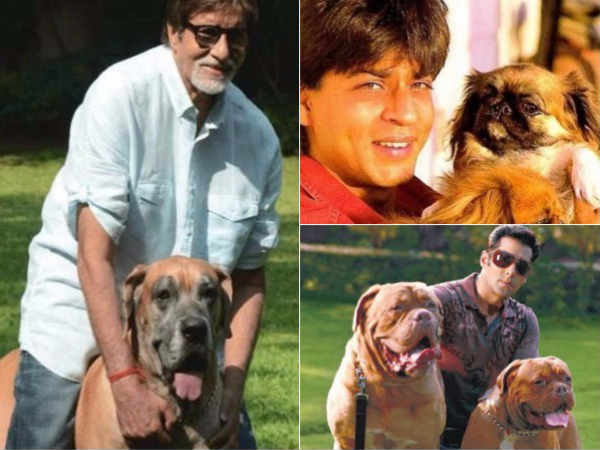 world-animal-day-see-bollywood-stars-with-their-pets