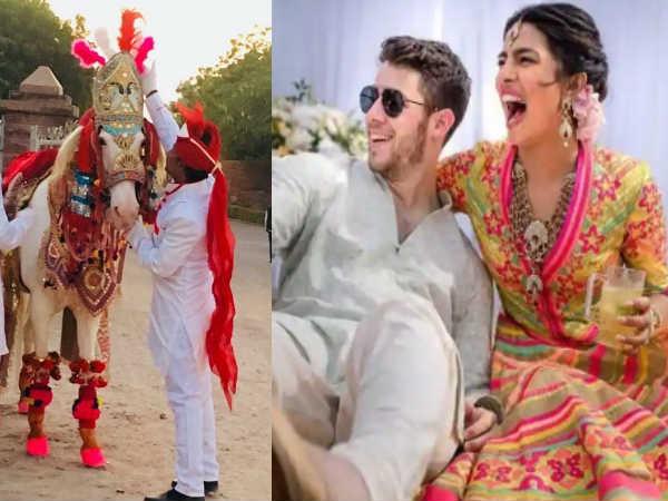 शादी में घोड़े और हांथी का इस्तेमाल कर बुरे फंसे प्रियंका चोपड़ा और निक जोनस, इस संस्था ने किया...
