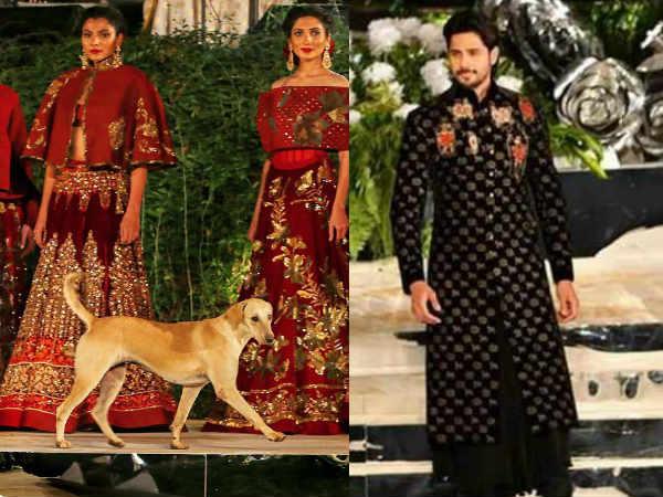 सिद्धार्थ मल्होत्रा के फैशन शो में घुसा कुत्ता, Video देखकर नहीं रुकेगी आपकी हंसी