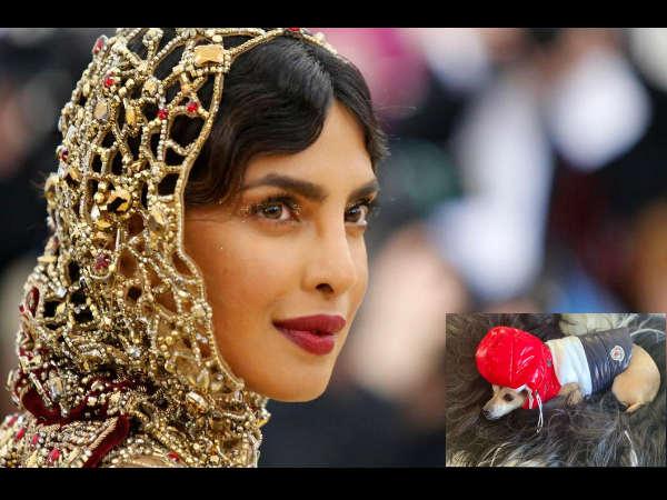 प्रियंका चोपड़ा का डॉगी पहनता है 35 लाख की जैकेट, देखकर आपके भी उड़ जाएंगे होश