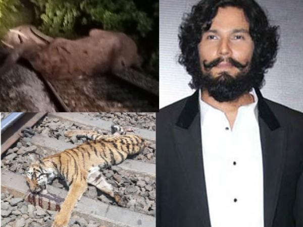 ट्रेन की टक्कर से दो बाघ और एक हाथी की मौत, दुखी रणदीप हुड्डा ने कर डाला ये पोस्ट!