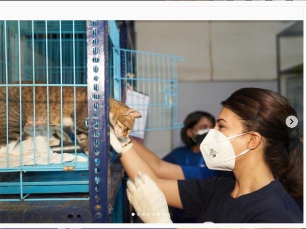 कोरोना में जैकलीन फर्नांडीज कर रहीं नेक काम, YOLO फाउंडेशन के साथ मिलकर जानवरों तक पहुंचाया खाना