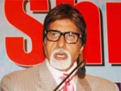Lions Walk Past Amitabh Bachchan Gir