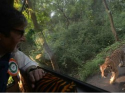 Amitabh Bachchan Chased By Tiger 050631 Pg