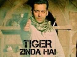 Salman Khan Ek Tha Tiger Sequel Details Matt Damon S Charact