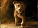 'द लॉयन किंग' Box Office: शाहरुख की आवाज का छाया जादू- पहले दिन हुई जबरदस्त कमाई